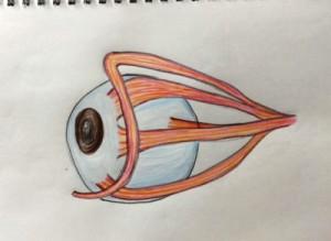 目袋のたるみの原因筋力の低下