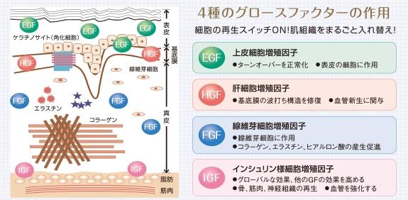 細胞増殖生長因子、細胞アンチエイジング
